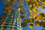 Желтые листья на фоне разноцветного дома, фото № 110360, снято 26 сентября 2007 г. (c) Юрий Синицын / Фотобанк Лори