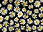Фон из цветков ромашек, фото № 111164, снято 23 июля 2007 г. (c) Ольга Хорькова / Фотобанк Лори