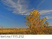 Купить «Осенний куст на фоне города», фото № 111212, снято 20 октября 2007 г. (c) Арестов Андрей Павлович / Фотобанк Лори
