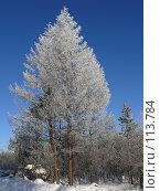 Купить «Дерево в инее», фото № 113784, снято 9 ноября 2007 г. (c) Владимир Ильин / Фотобанк Лори