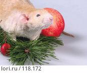 Купить «Крыса рекс в ожидании», фото № 118172, снято 23 сентября 2007 г. (c) Иван / Фотобанк Лори