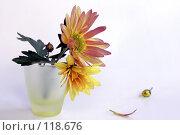 Купить «Оранжевый цветок хризантемы», фото № 118676, снято 17 ноября 2007 г. (c) Demyanyuk Kateryna / Фотобанк Лори