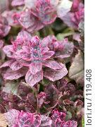 Купить «Красно-розовое пушистое растение, Rose-Red Shaggy Plant», фото № 119408, снято 8 мая 2007 г. (c) Astroid / Фотобанк Лори