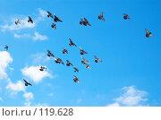 Купить «Летящие голуби», фото № 119628, снято 26 декабря 2006 г. (c) Сергей Старуш / Фотобанк Лори