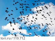 Купить «Летящие голуби», фото № 119712, снято 24 апреля 2018 г. (c) Сергей Старуш / Фотобанк Лори