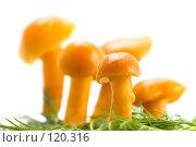 Купить «Грибы на траве», фото № 120316, снято 17 ноября 2007 г. (c) Угоренков Александр / Фотобанк Лори