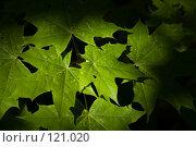 Купить «Лето», фото № 121020, снято 10 июня 2007 г. (c) Coler / Фотобанк Лори