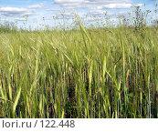 Купить «Поле», фото № 122448, снято 26 июля 2007 г. (c) Бяков Вячеслав / Фотобанк Лори