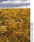 Купить «Ржаное поле под драматичным облачным небом», фото № 122524, снято 22 июня 2006 г. (c) Михаил Лавренов / Фотобанк Лори