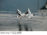 Купить «Чайки на море», фото № 122688, снято 5 октября 2007 г. (c) Ирина Крамарская / Фотобанк Лори