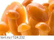 Купить «Грибы», фото № 124232, снято 17 ноября 2007 г. (c) Угоренков Александр / Фотобанк Лори