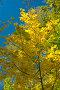 Осенний клен, фото № 124744, снято 22 сентября 2007 г. (c) Петухов Геннадий / Фотобанк Лори