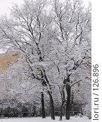 Купить «Запорошенные снегом деревья», фото № 126896, снято 16 ноября 2007 г. (c) Ольга Хорькова / Фотобанк Лори