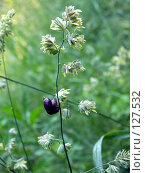 Купить «Улитка на растении», фото № 127532, снято 1 июля 2007 г. (c) Бяков Вячеслав / Фотобанк Лори