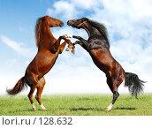 Две лошади дерутся в поле, фото № 128632, снято 29 сентября 2007 г. (c) Абрамова Ксения / Фотобанк Лори