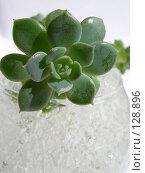 Купить «Цветок в стеклянной вазе с прозрачной субстанцией», фото № 128896, снято 7 августа 2007 г. (c) Елена Бринюк / Фотобанк Лори