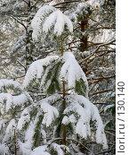 Купить «Молодое дерево под снегом», фото № 130140, снято 23 марта 2005 г. (c) Serg Zastavkin / Фотобанк Лори