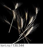 Колосья пшеницы изолированные на черном фоне. Стоковое фото, фотограф Влада Посадская / Фотобанк Лори