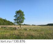 Купить «Летний русский пейзаж с одиноким деревом», фото № 130876, снято 18 ноября 2018 г. (c) Олег Крутов / Фотобанк Лори