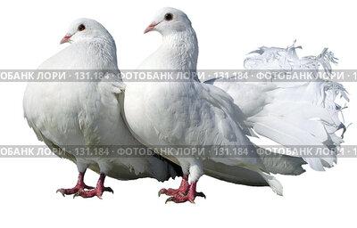 Купить «Белые голуби», фото № 131184, снято 18 июня 2018 г. (c) Дудакова / Фотобанк Лори