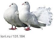 Купить «Белые голуби», фото № 131184, снято 24 августа 2019 г. (c) Дудакова / Фотобанк Лори