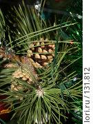 Купить «Шишка на елке», фото № 131812, снято 2 января 2007 г. (c) Андрей Бурдюков / Фотобанк Лори