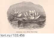 """Купить «Белая водяная лилия Nymphea alba, иллюстрация из книги """"Flowers of the field"""", издано в Лондоне в 1888», иллюстрация № 133456 (c) Tamara Kulikova / Фотобанк Лори"""