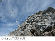 Стая чаек над каменистым выступом. Стоковое фото, фотограф Николаенко Алексей / Фотобанк Лори