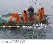 Лов рыбы сетями. Стоковое фото, фотограф Николаенко Алексей / Фотобанк Лори