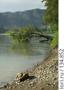 Купить «Упавшее дерево», фото № 134852, снято 30 июня 2006 г. (c) Сергей Козлов / Фотобанк Лори