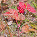 Костяника, фото № 137216, снято 23 сентября 2007 г. (c) Мирзоянц Андрей / Фотобанк Лори