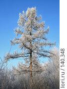 Купить «Зимняя лиственница», фото № 140348, снято 5 декабря 2007 г. (c) Круглов Олег / Фотобанк Лори