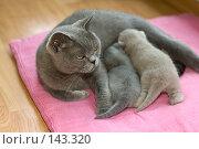 Купить «Кошка кормит котят», фото № 143320, снято 23 мая 2018 г. (c) Игорь Соколов / Фотобанк Лори