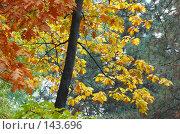 Купить «Разноцветная осень», фото № 143696, снято 27 октября 2007 г. (c) Сергей Старуш / Фотобанк Лори