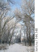Купить «Дорога в зимнем лесу», фото № 144148, снято 5 декабря 2007 г. (c) Круглов Олег / Фотобанк Лори