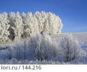 Белая роща. Стоковое фото, фотограф Герман Филатов / Фотобанк Лори
