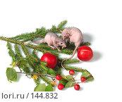 Купить «Крысы шепчутся», фото № 144832, снято 23 сентября 2007 г. (c) Иван / Фотобанк Лори