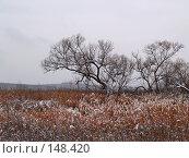 Купить «Зимняя зарисовка», фото № 148420, снято 20 ноября 2007 г. (c) Олег Рубик / Фотобанк Лори