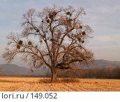 Купить «Одинокий ильм», фото № 149052, снято 13 декабря 2007 г. (c) Олег Рубик / Фотобанк Лори