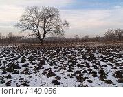 Купить «Зимнее болото, Приморье», фото № 149056, снято 13 декабря 2007 г. (c) Олег Рубик / Фотобанк Лори