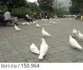 Купить «Много белых голубей на Народной площади (People Square). Шанхай. Китай», фото № 150964, снято 19 сентября 2018 г. (c) Вера Тропынина / Фотобанк Лори