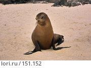 Купить «Модель с Галапагосского пляжа», фото № 151152, снято 5 декабря 2007 г. (c) Николай / Фотобанк Лори