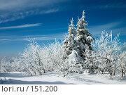 Купить «Заснеженные деревья», фото № 151200, снято 7 марта 2006 г. (c) Максим Горпенюк / Фотобанк Лори