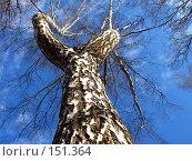 Купить «Вверх ногами», фото № 151364, снято 8 апреля 2007 г. (c) Бяков Вячеслав / Фотобанк Лори