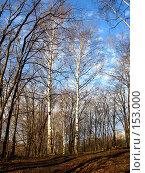Купить «Чистый воздух», фото № 153000, снято 8 апреля 2007 г. (c) Бяков Вячеслав / Фотобанк Лори