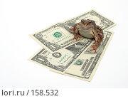 Купить «Лягушка сидит на долларах», фото № 158532, снято 7 июля 2007 г. (c) Cветлана Гладкова / Фотобанк Лори