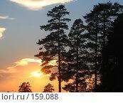 Купить «Силуэты сосен на фоне заката», фото № 159088, снято 9 сентября 2005 г. (c) Карелин Д.А. / Фотобанк Лори