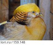Купить «Птичка», фото № 159148, снято 27 октября 2007 г. (c) Карелин Д.А. / Фотобанк Лори