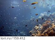 Купить «Подводный мир», фото № 159412, снято 17 августа 2007 г. (c) Карасева Екатерина Олеговна / Фотобанк Лори