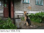 Купить «Ты скоро, хозяин?», фото № 159772, снято 19 июня 2007 г. (c) Екатерина Соловьева / Фотобанк Лори